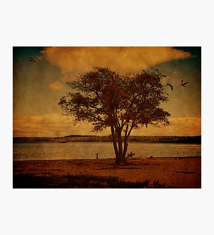 Climate of Freedom Photographic Print