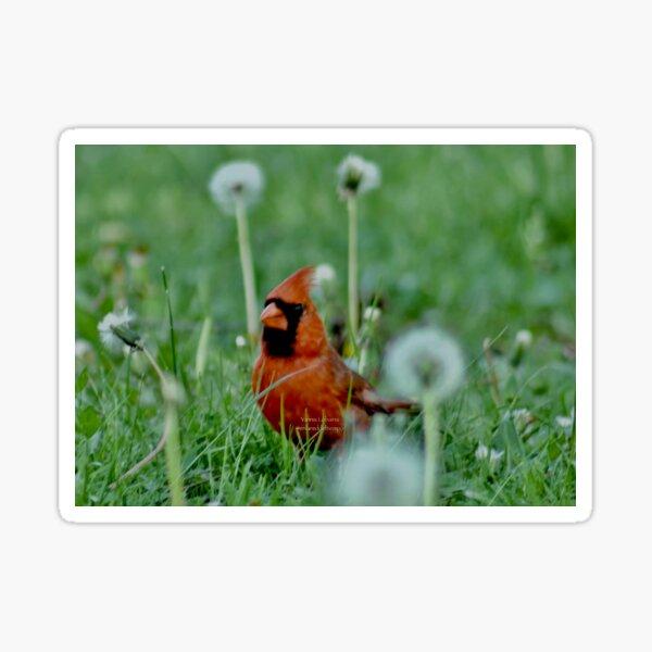 The mystical Cardinal By Yannis Lobaina  Sticker