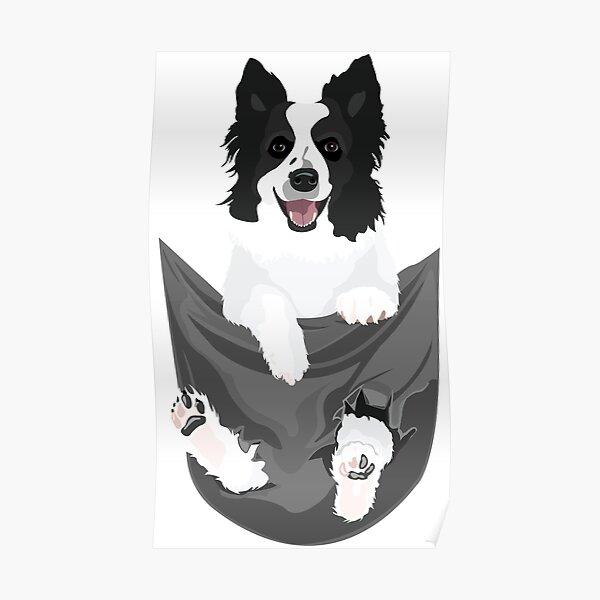Border Collie Dog in a Pocket Poster