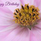 Cosmos Flower - Birthday Card by Ellesscee