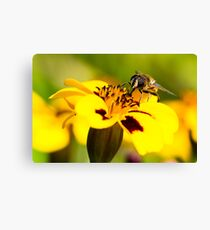 The Worker Bee Canvas Print