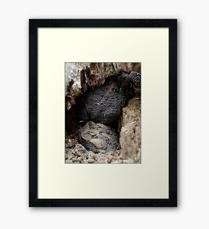 THE BIG SQUEEZE Framed Print