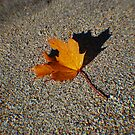Autumn on the beach by julie08