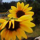 Shy Wildflowers by Robbi Levesque