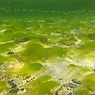 Algae Bloom  by globeboater