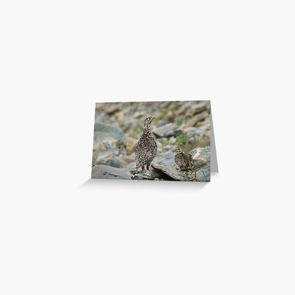 Rock Ptarmigan & chick Greeting Card