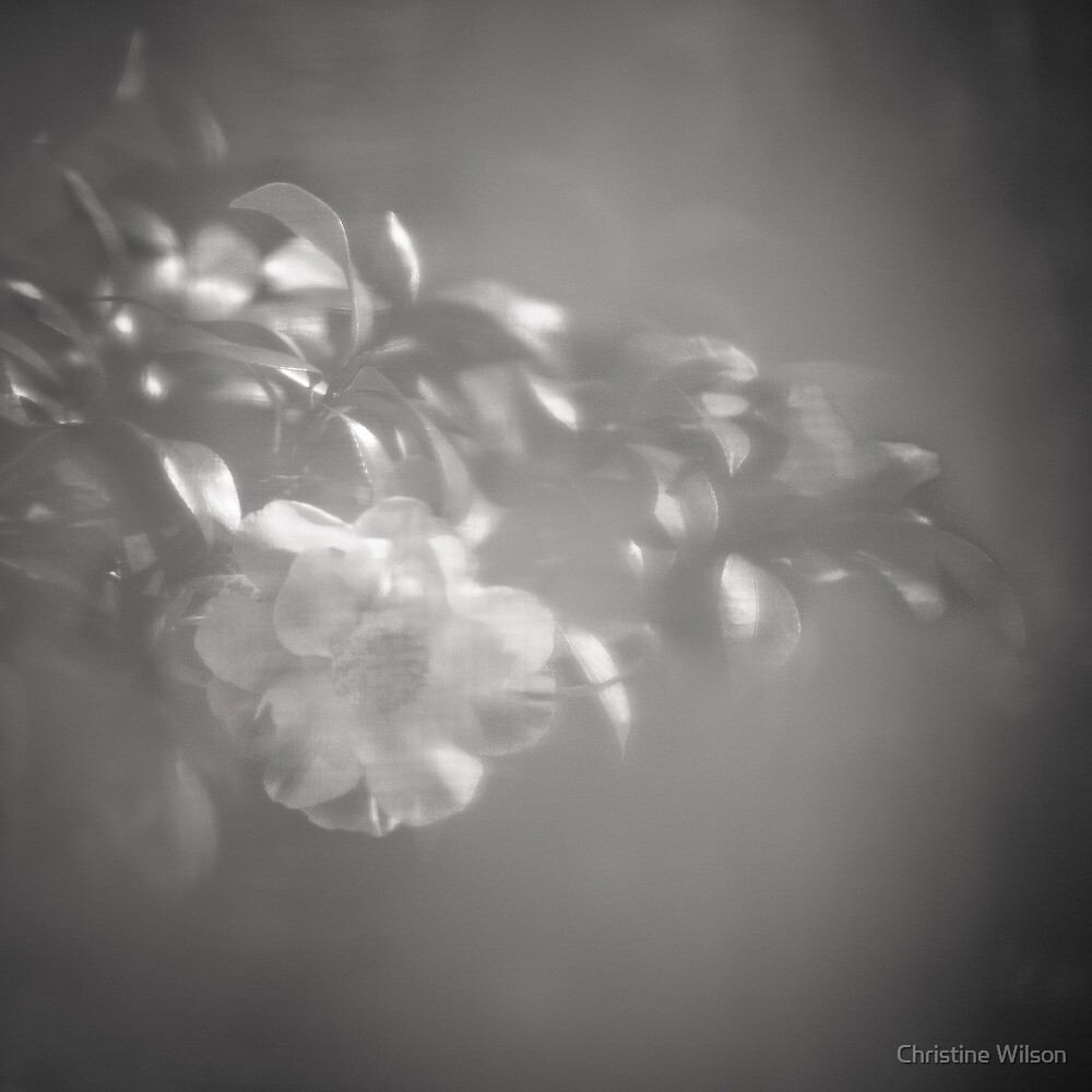 Floral by Christine Wilson