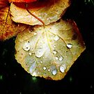 As Beautiful as Autumn Leaves by RobertCharles