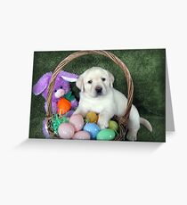 Easter?  There's nothing to eat! Greeting Card