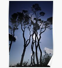Paperbark Silhouettes. Poster