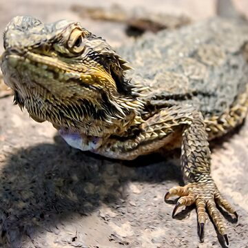Bearded Dragon by Mossrocket