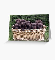 A basket of Chocolates! Greeting Card