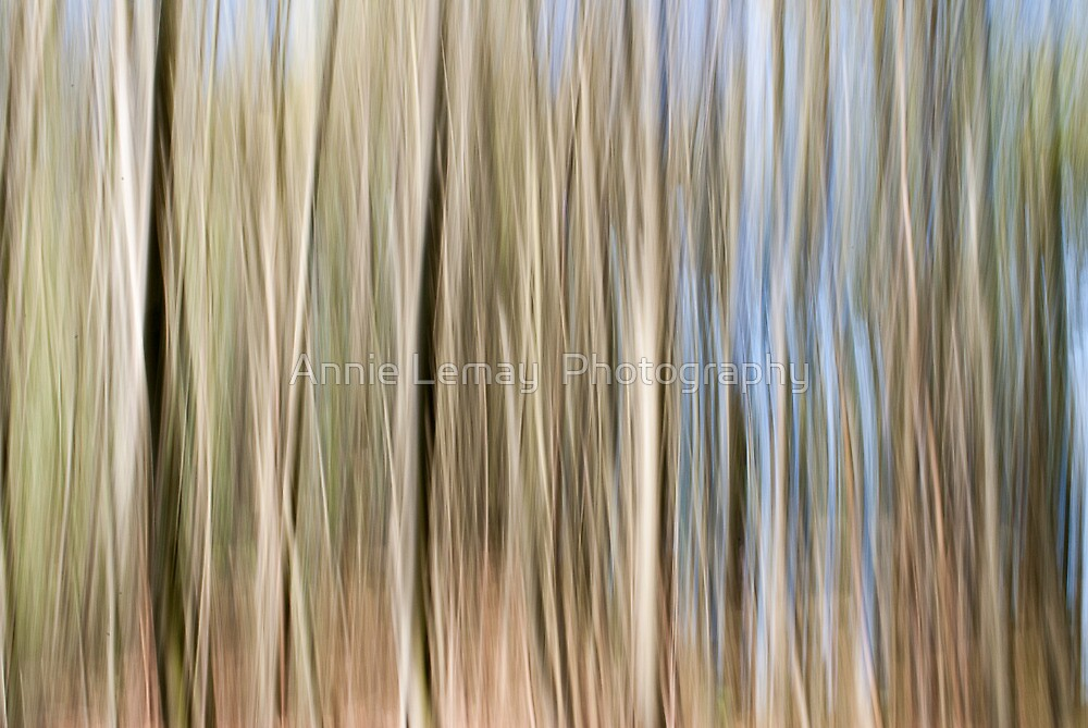 Movement by Annie Lemay  Photography