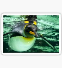 King Penguin Sticker