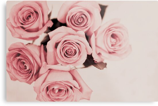 roses by cmpotts