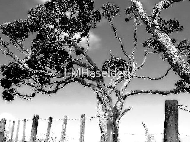 Pohutukawa. Elliots Bay. Northland, New Zealand. by Lynne Haselden