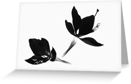 Black|White [Print and iPhone / iPad / iPod Case] by Damienne Bingham