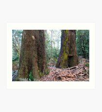 Rain forest Dandenongs Art Print
