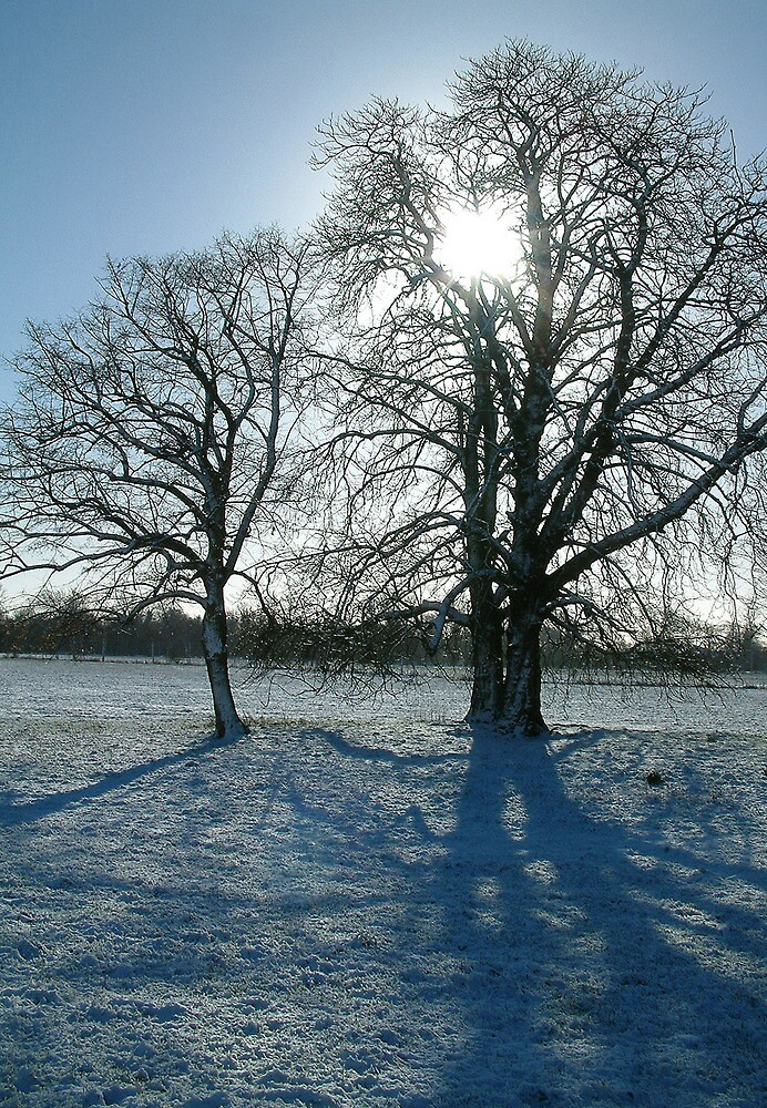 Winter trees in Oxford. by Mike Lester
