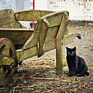 Farmyard Cat by Michelle McMahon
