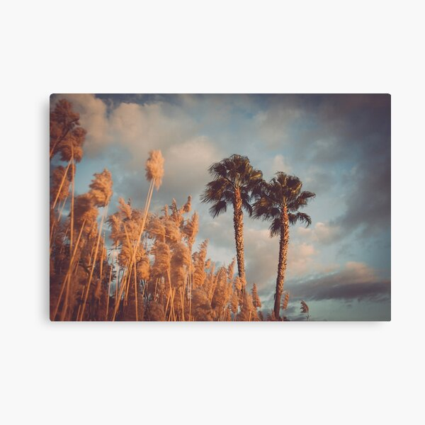 Reeds by the Beach - Dramatic Scenery with Palms Canvas Print