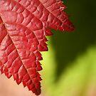 Red Leaf Lines by John Dalkin