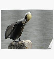 Cedar Key, FL Pelican Poster
