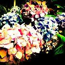 Hydrangea by Chris Goodwin