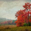 Red Tree in the Field by Debra Fedchin