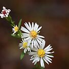 White Wild Flowers by Melody Ricketts