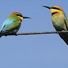 Pair of Rainbow Bee-eaters by paulinea