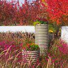 Fall Garden by Jordan Selha