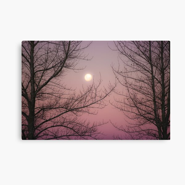 LAST WINTER MOON Canvas Print