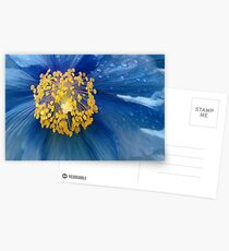 Three flowers: Blue - Reflecting the sun in the sky, petals of rain mourn forgotten memories Postcards