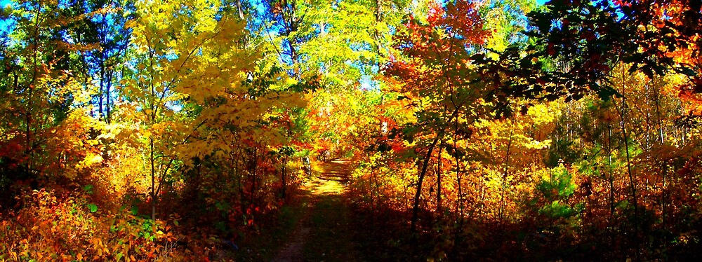 beautiful day in the fall woods by Eric langley