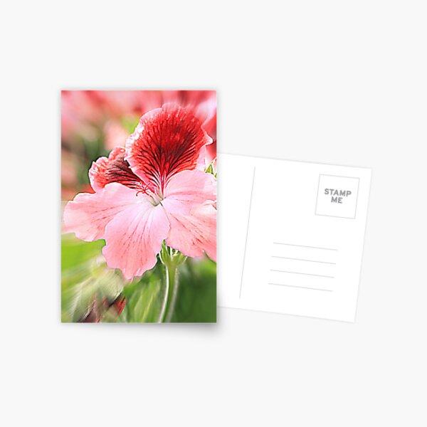 dianthus chinensis Postcard
