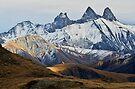 Autumn on Alpine needles by Patrick Morand