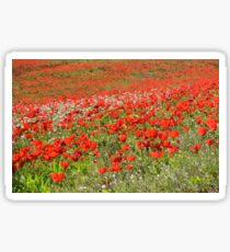 Red Anemone coronaria AKA Spanish marigold or Kalanit  Sticker