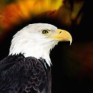 American Eagle by Elaine Manley