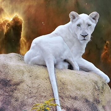 White Lion Cub by Lucindawind