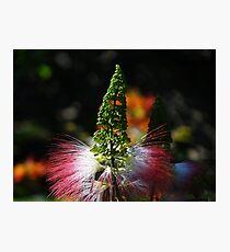 Weeds - Hierbajo Photographic Print