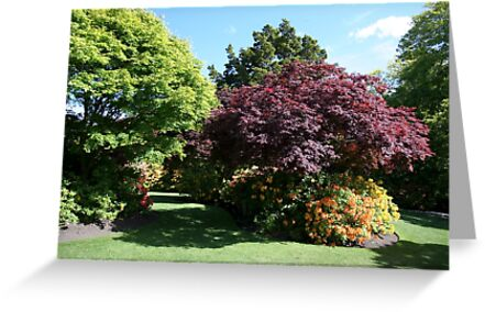 Shrubs and bushes in a garden  by PhotoStock-Isra