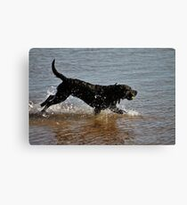 Now This is Fun! Canvas Print
