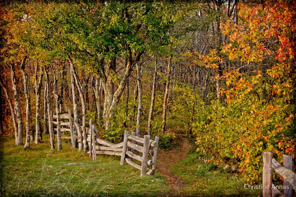 Sunset on an Autumn Wood by Christine Annas