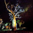 The Astronomer Tree by David Haworth