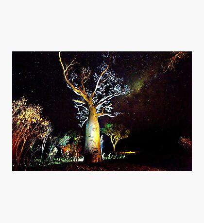 The Astronomer Tree Photographic Print