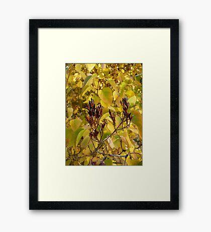Fall Lilacs Framed Print