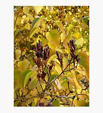 Fall Lilacs Photographic Print