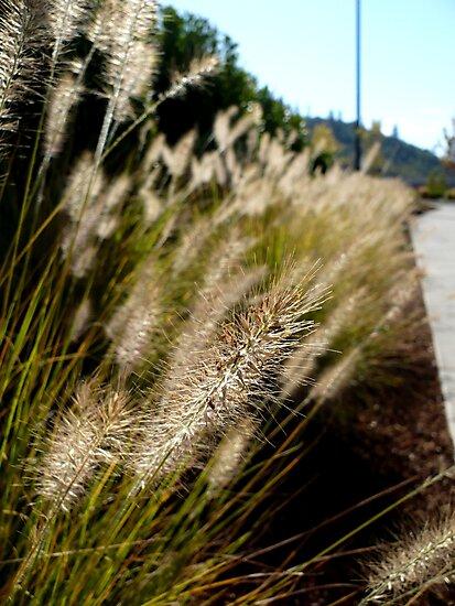 Along The Beaten Path by Jess Meacham