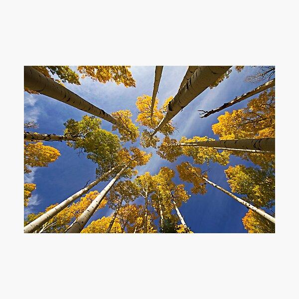 Aspen Color Photographic Print